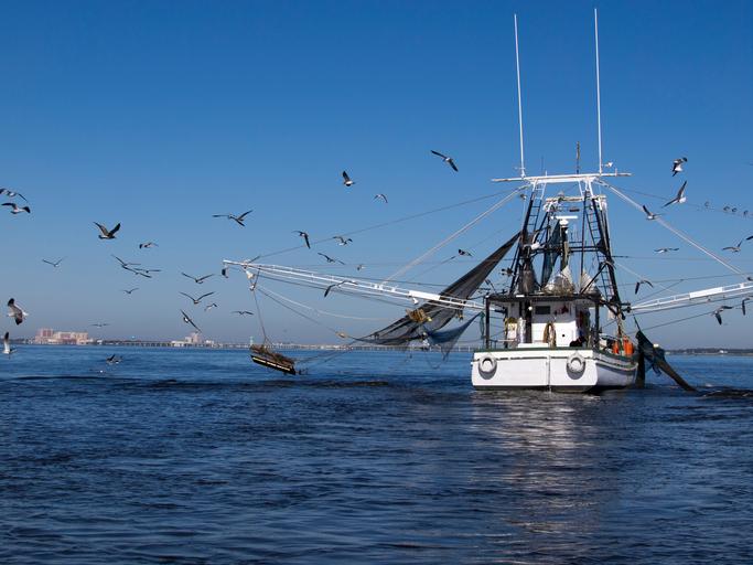 La pesca en Corro de Pescanova